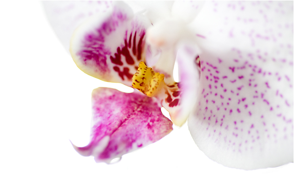 orchidee_blog01